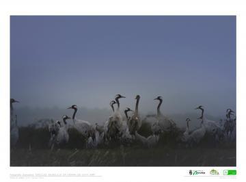 Exposición Fotográfico Digital. Grullas, Moraleja en Sierra de Gata 2019