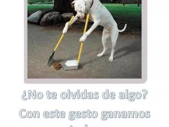 CAMPAÑA DE SENSIBILIZACIÓN, ANIMALES DOMESTICOS