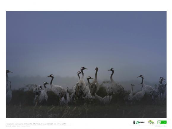 EXPOSICIÓN FOTOGRÁFICA, GRULLAS, MORALEJA EN SIERRA DE GATA 2019