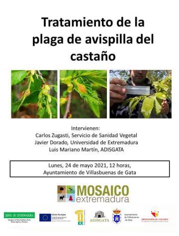 TRATAMIENTO DE LA PLAGA DE AVISPILLA DEL CASTAÑO